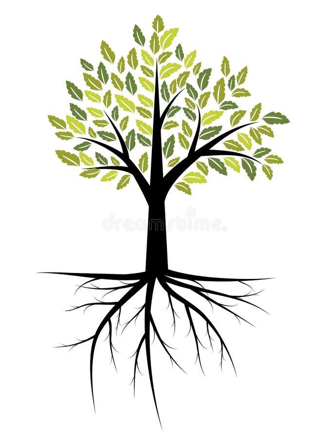树例证 向量例证