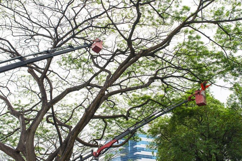 树修剪 图库摄影