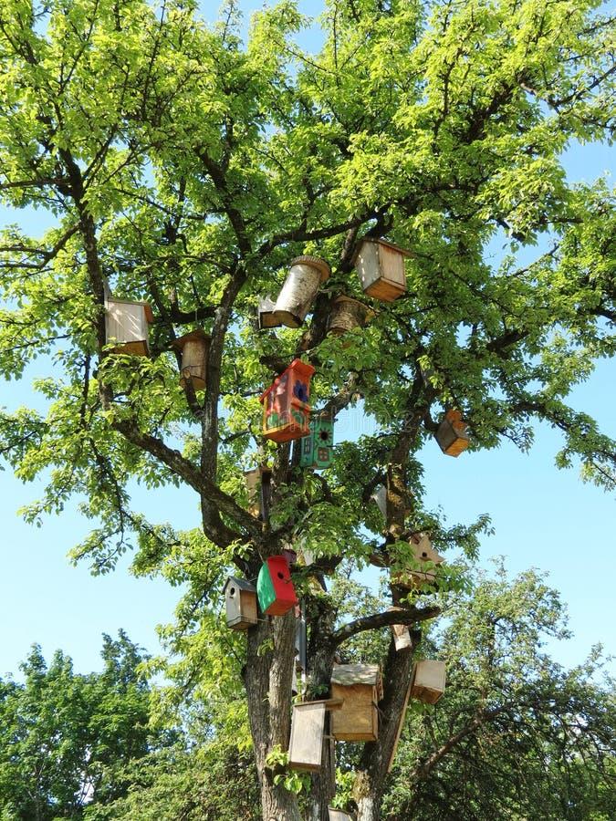 树充分的嵌套箱在庭院,立陶宛里 库存图片