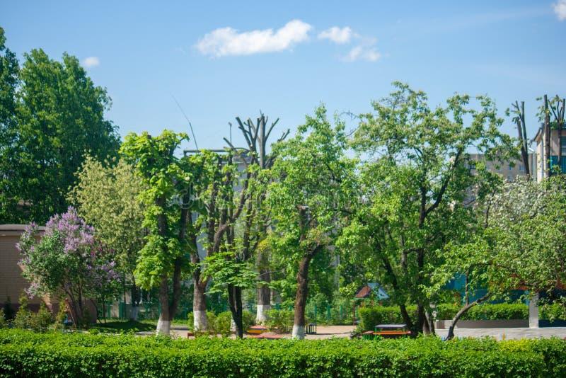 树光秃的播种的树干在城市站立丑恶的木栅 免版税图库摄影