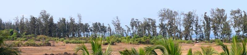 树全景-绿色环境行  免版税图库摄影