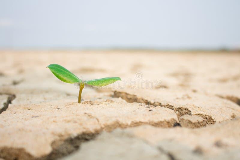 树再生天旱情况 免版税库存图片