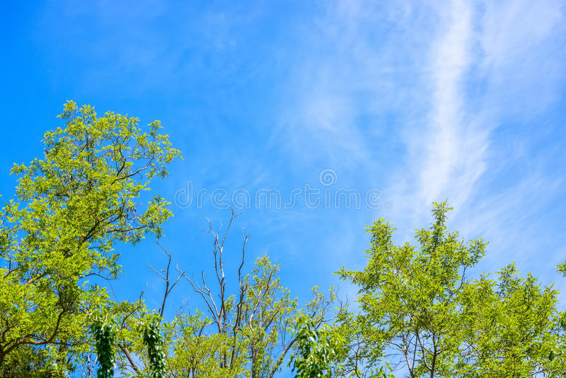 树冠在夏天 免版税库存照片