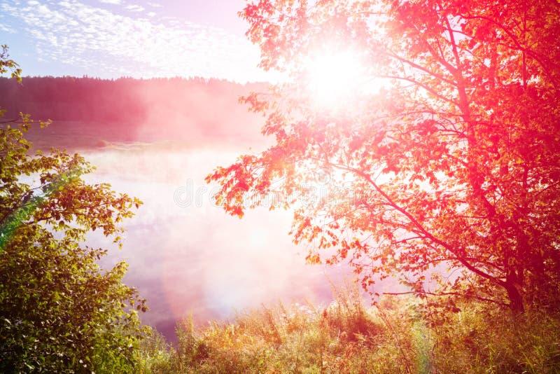 树冠在河的春天森林里反对与太阳的蓝天 太阳和太阳光芒在水河反射了 春天夏天 免版税库存图片
