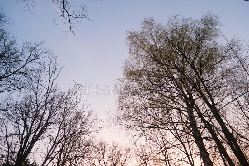 树冠在神奇森林里 免版税库存图片