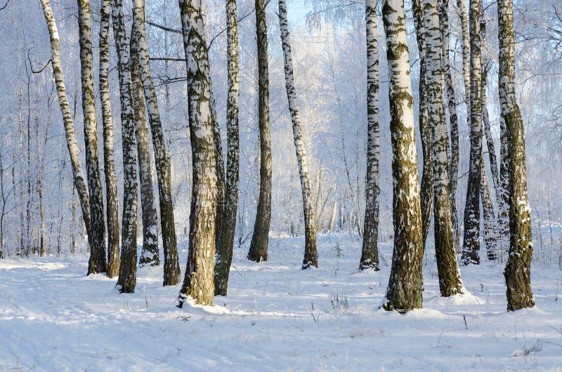 树冰的,冬天风景美丽如画的桦树树丛 免版税图库摄影