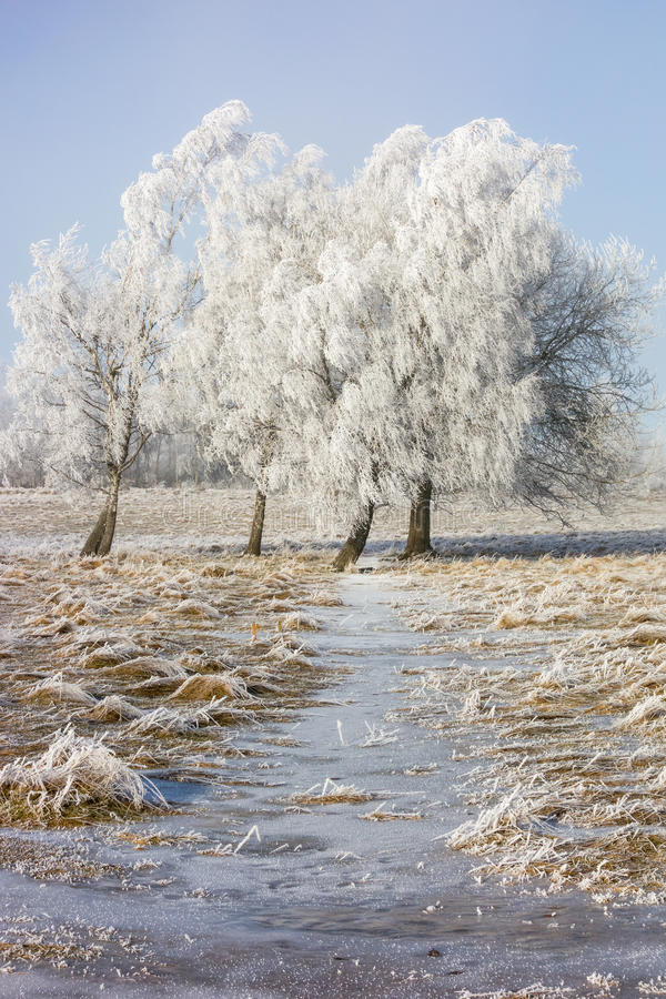 树冰盖了树丛 免版税库存图片