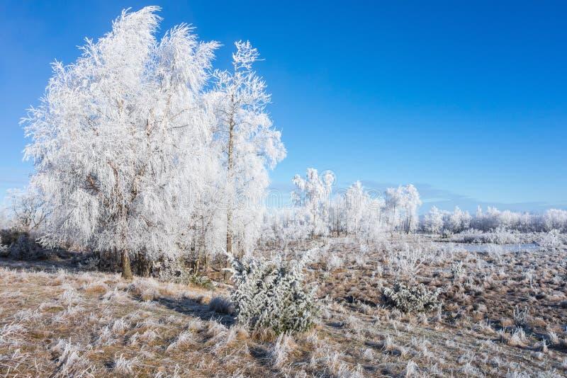 树冰盖了树丛 免版税库存照片