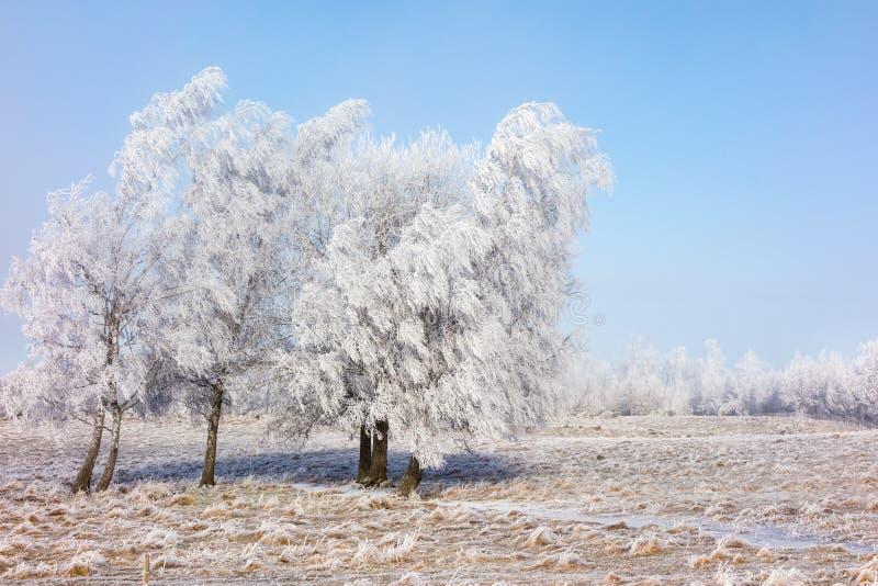 树冰盖了树丛 免版税图库摄影