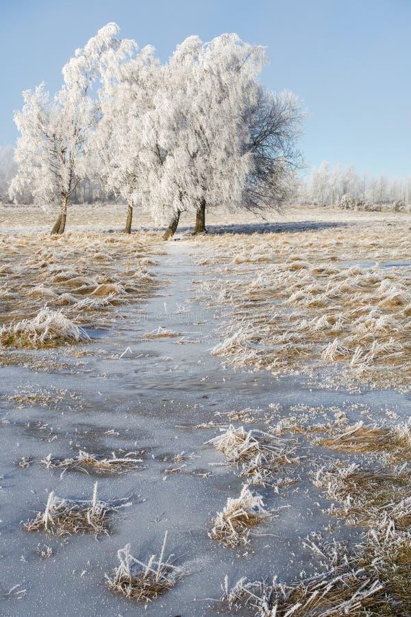 树冰盖了树树丛 库存照片
