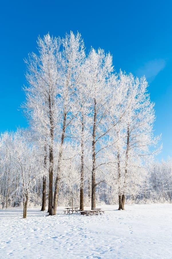 树冰 免版税库存图片