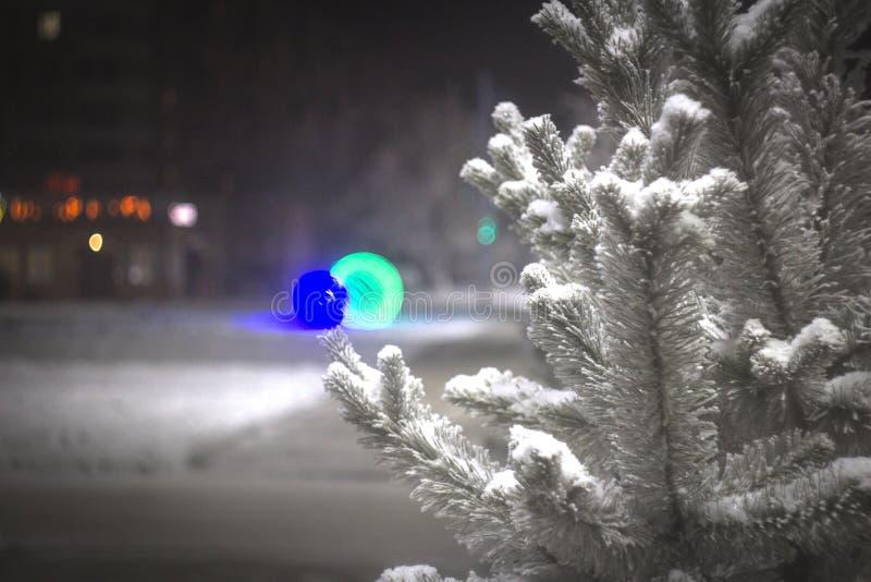 树分支在树冰的以与bokeh作用的夜光为背景 免版税图库摄影