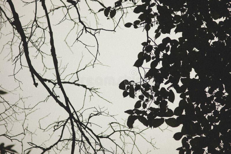 树分支在黑白的 免版税库存图片