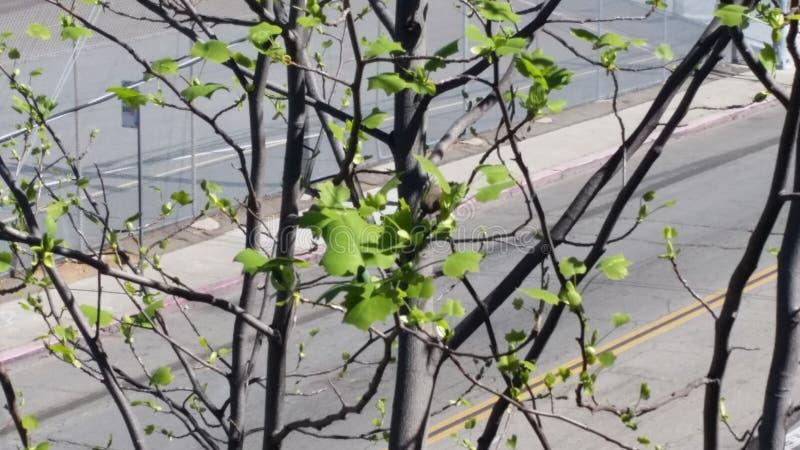 树分支  库存照片