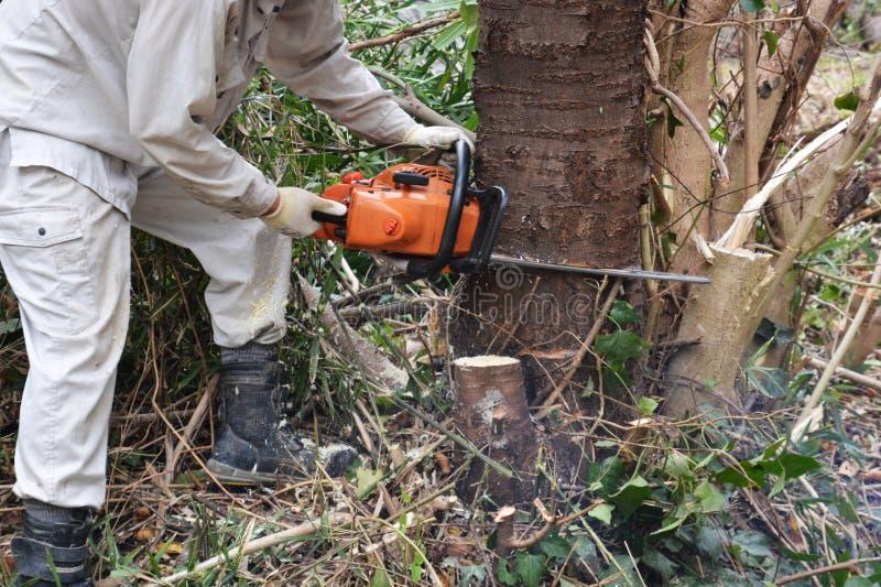 树切口 免版税图库摄影