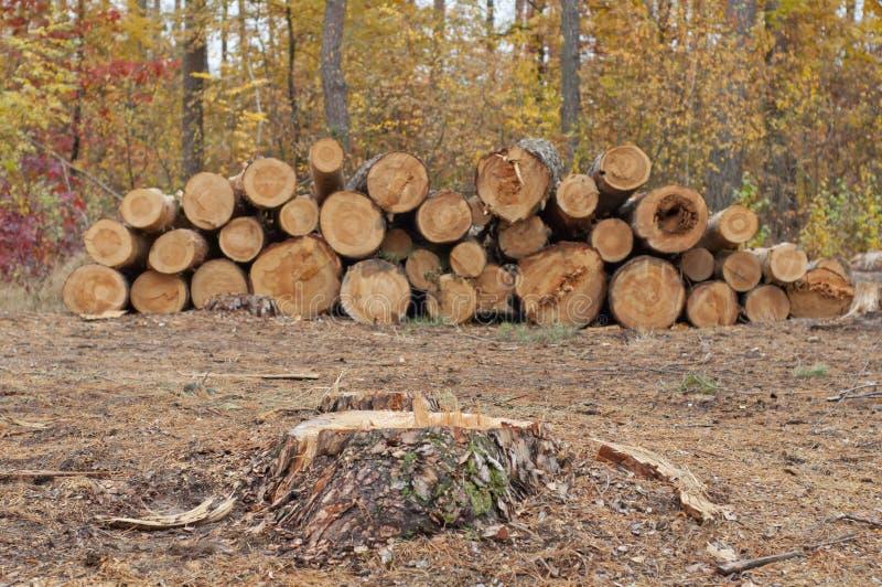 树切口 免版税库存照片