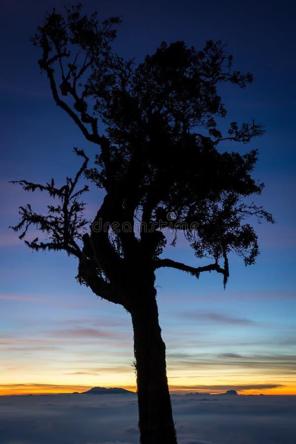 树剪影与五颜六色的日落或日出天空的在露营地7 拉翁火山是最富挑战性所有Java的山 免版税库存图片
