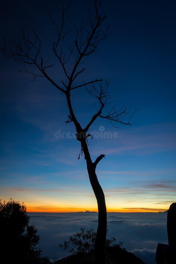 树剪影与五颜六色的日落或日出天空的在露营地7 拉翁火山是最富挑战性所有Java的山 库存图片