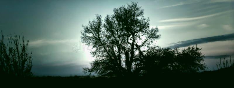 树剪影与成为不饱和的天空的 免版税图库摄影