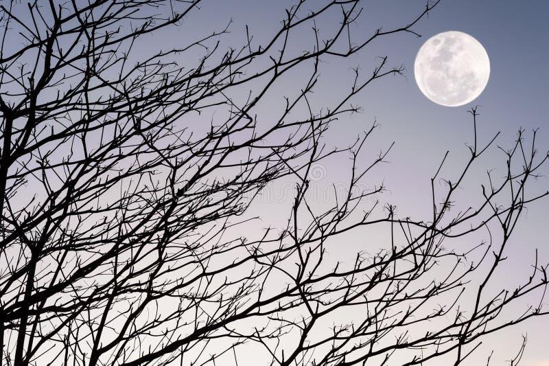 树剪影分支在天空日落的 库存图片