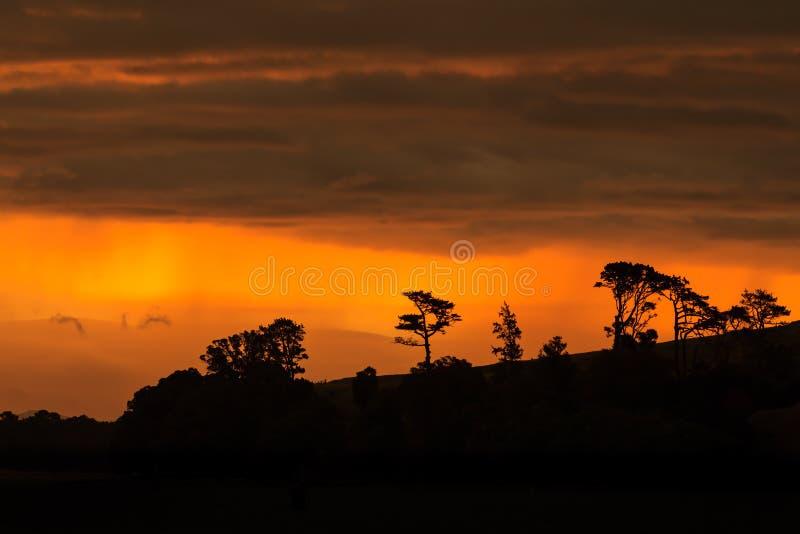 树剪影反对明亮的橙色日落的覆盖 库存图片