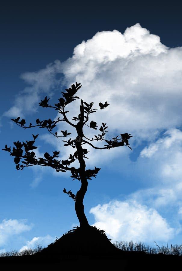 树剪影和云彩 库存照片