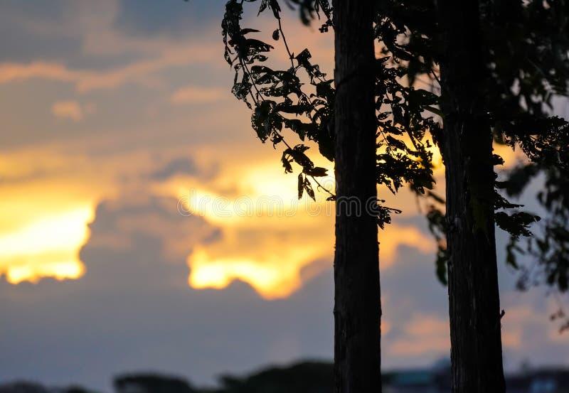 树剪影在日落,葡萄酒森林夏天深黑色a的 库存照片
