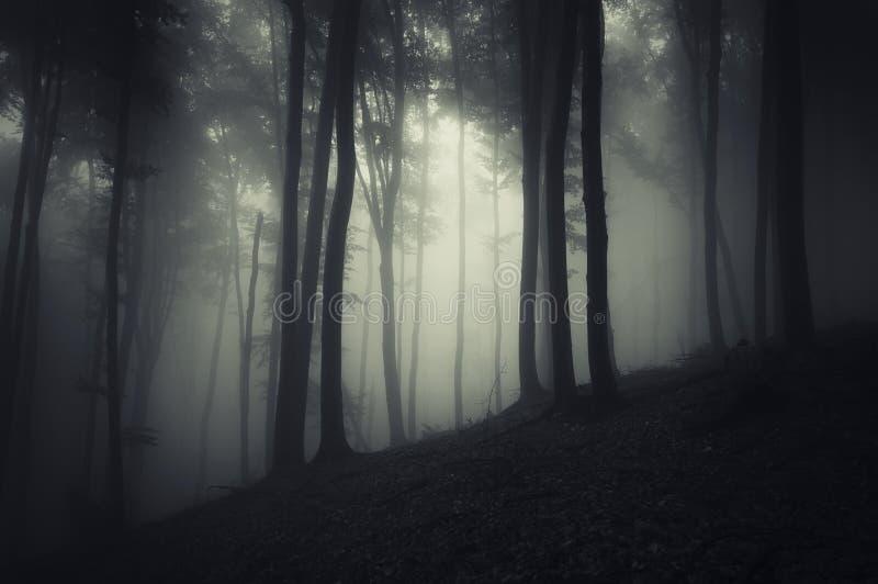 树剪影在有雾的一个黑暗的森林里图片