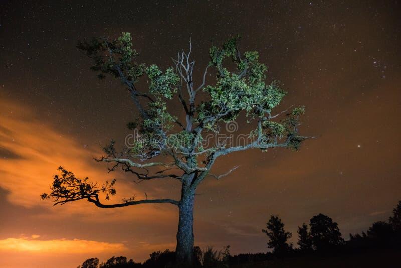 树剪影由一刹那光点燃了在与c的夜空下 库存照片