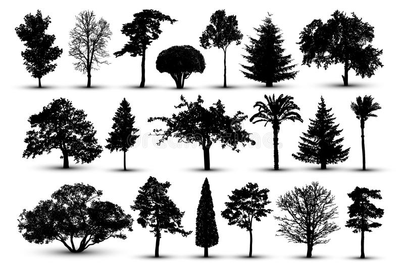 树剪影,森林传染媒介 自然公园 被隔绝的集合,在白色背景的树 向量例证