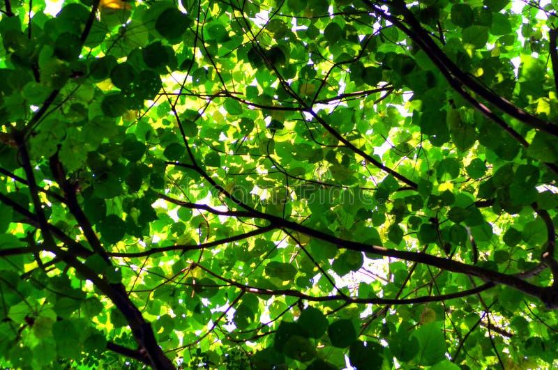 树叶子和太阳轻的抽象背景 免版税图库摄影