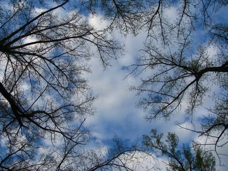树向往入白色云彩 免版税库存照片