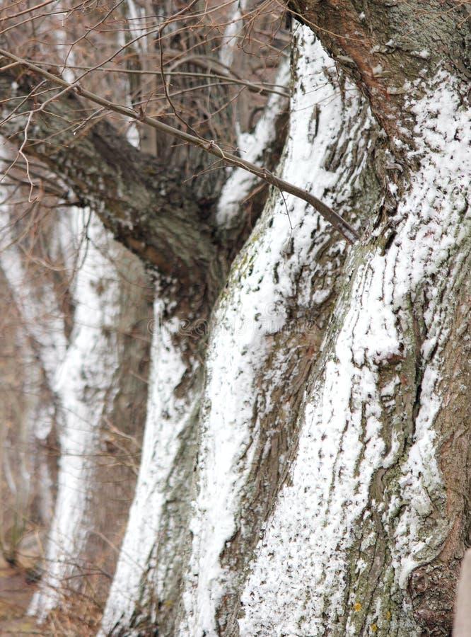 树吠声在雪,抽象背景的 库存图片