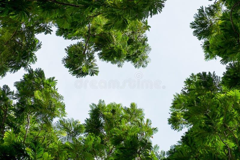 树周围在天空背景的空间 免版税图库摄影