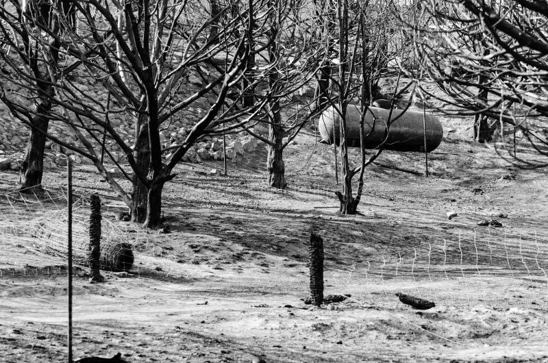 树和丙烷储罐在狂放的火以后 免版税库存照片