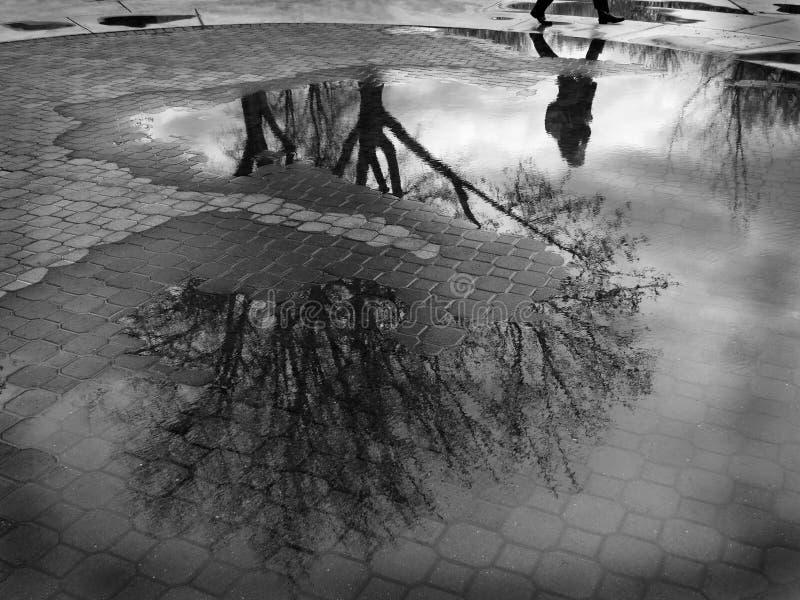 树和人走的鹅卵石的水坑反射 免版税库存照片