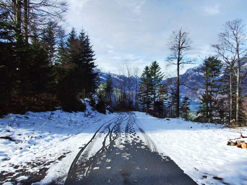 树和具球果森林倾斜的在山之间巨型的Alvier小组和Seeztal谷 免版税库存图片