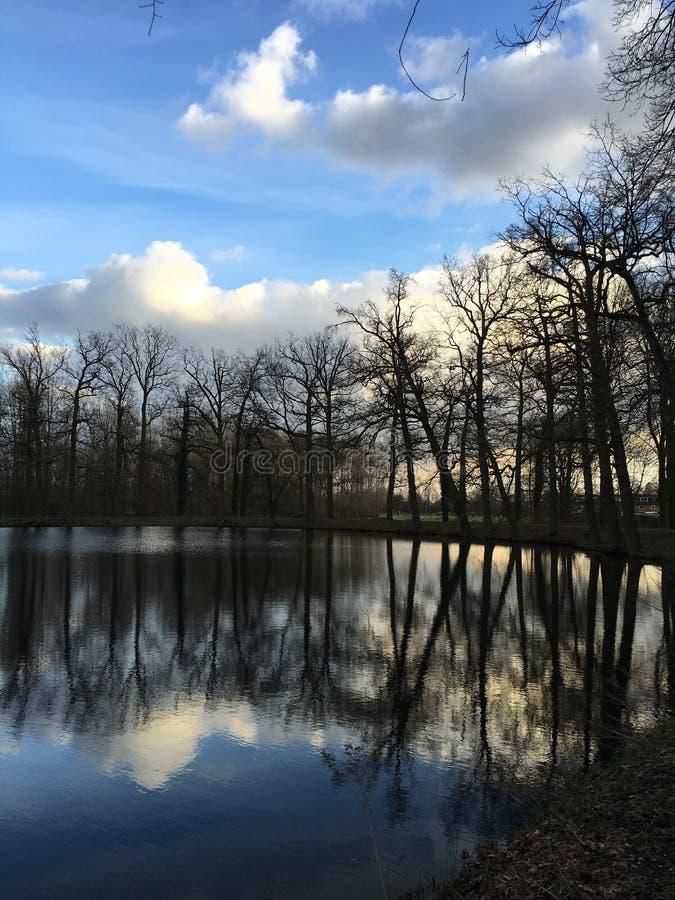 树和反射 免版税库存图片