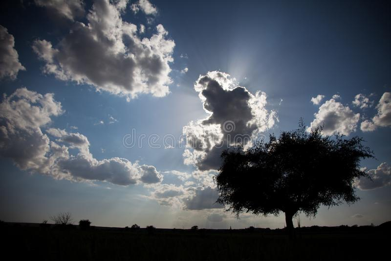 树和发光的云彩剪影  库存照片