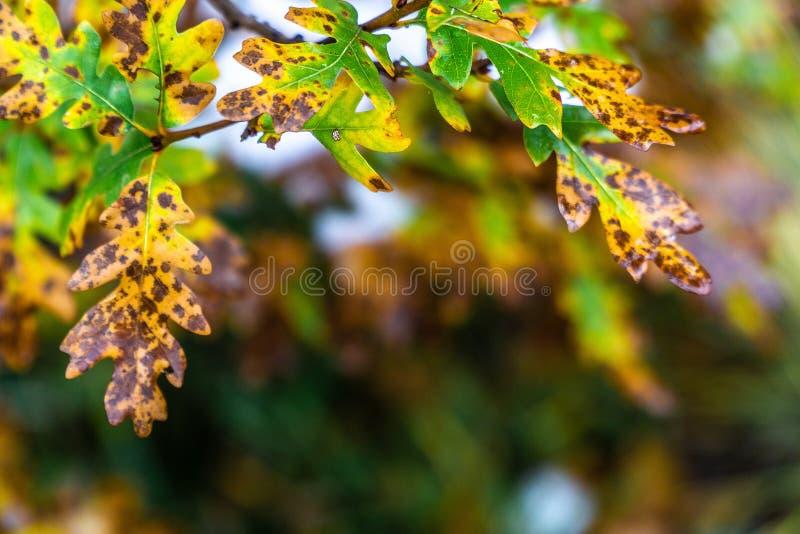 树和叶子在秋天秋天期间在雨以后 免版税库存照片