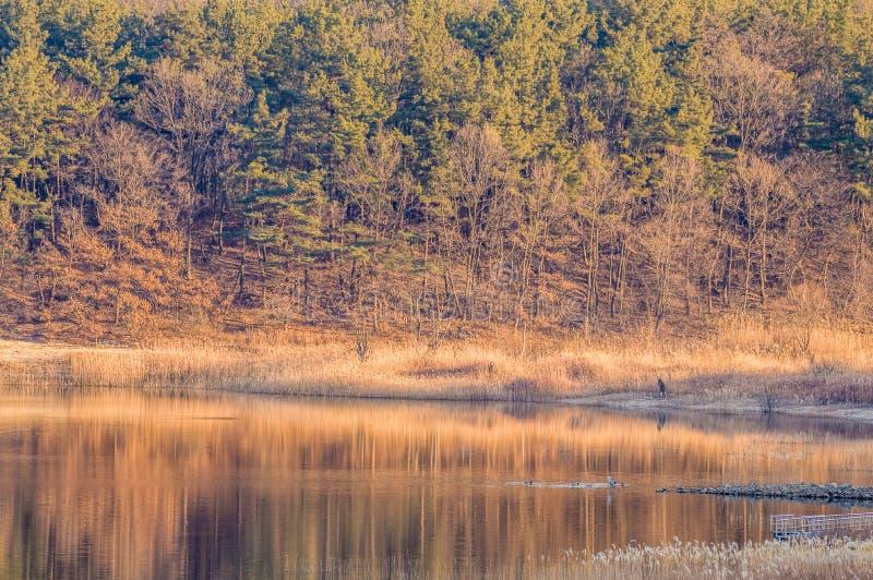 树和叶子围拢的小小海湾 库存图片