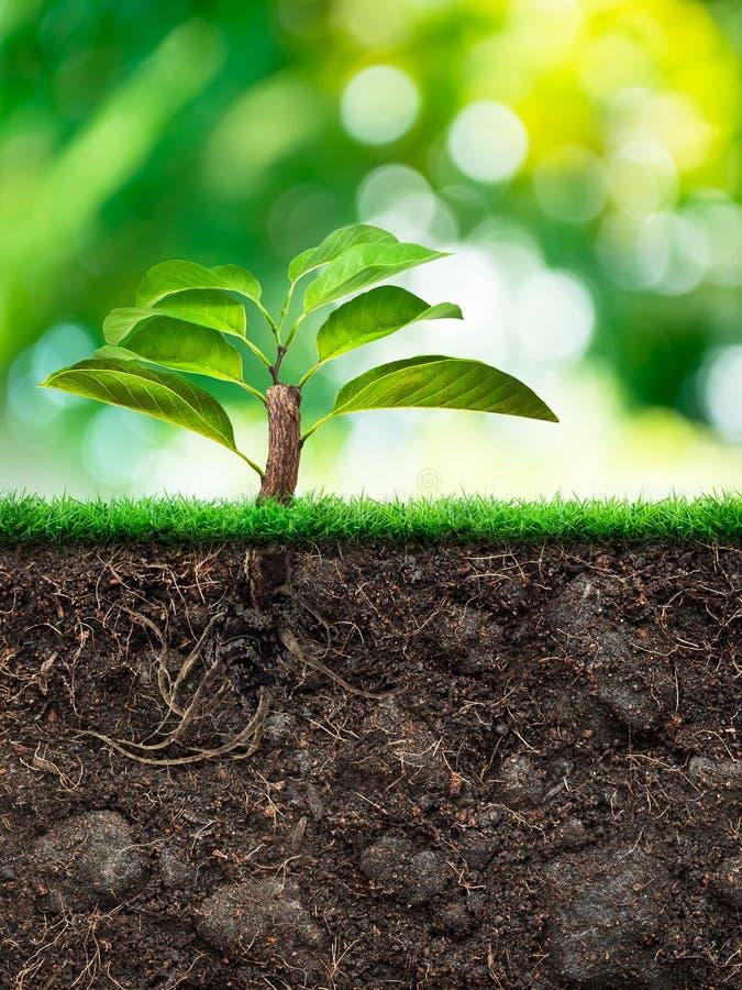 树和土壤与草 免版税库存照片