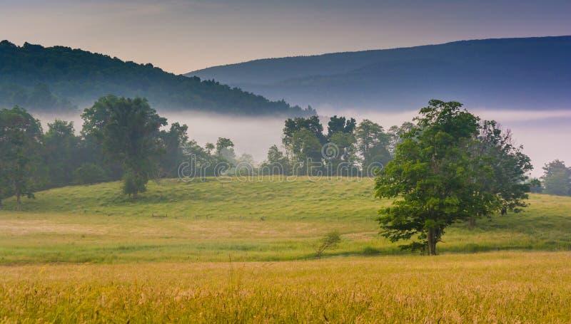 树和在有雾的m的遥远的山看法在农田的 免版税库存照片