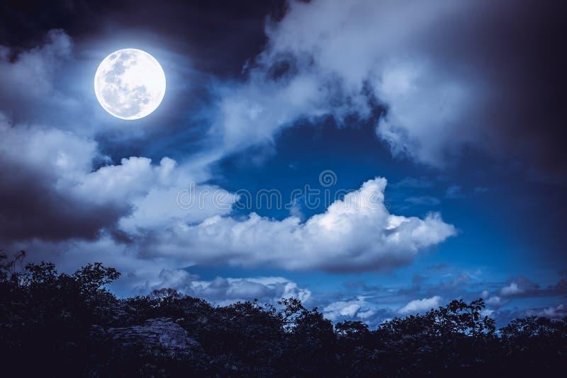 树和夜间剪影与字体,明亮的充分的m天空分类设计云彩图片