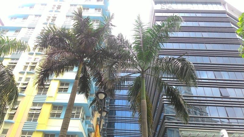 树和大厦 图库摄影