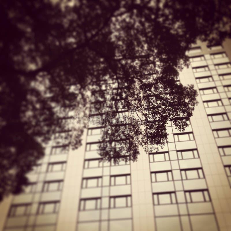 树和大厦 免版税图库摄影