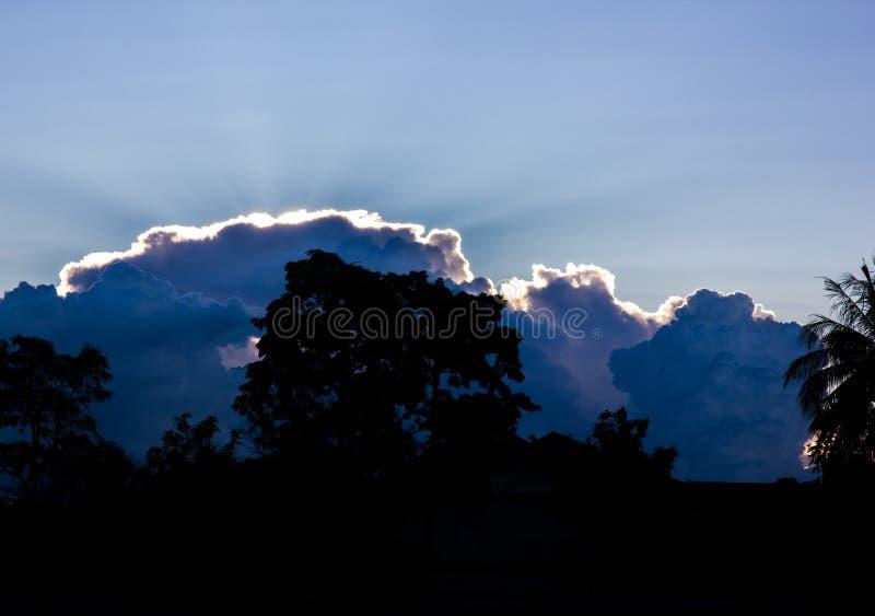 树和天空剪影与云彩在晚上时间 库存照片
