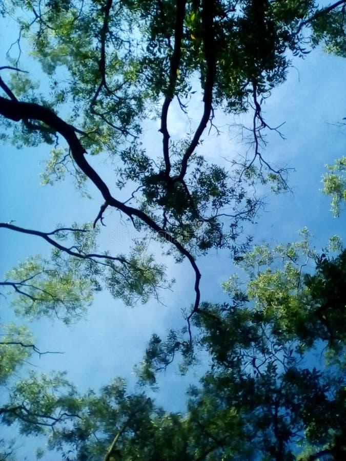 树和天蓝色天空 库存照片