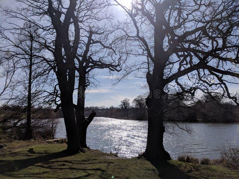 树和太阳在护城河停放,梅德斯通,肯特,英国 图库摄影