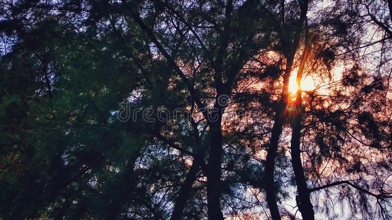 树和太阳 免版税库存照片